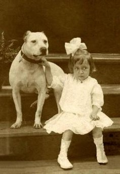 Vintage pit bull picture